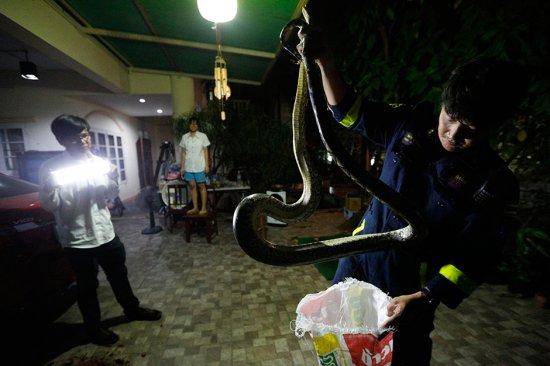 змеи в Таиланде