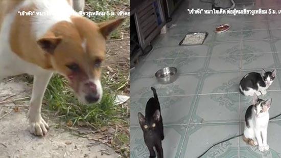 Собака отбила кошек у питона